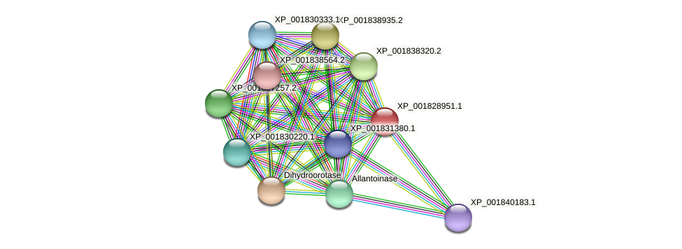 CC1G_03745 protein (Coprinopsis cinerea) - STRING interaction network