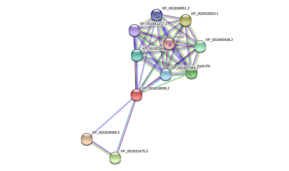 CC1G_01688 protein (Coprinopsis cinerea) - STRING interaction network