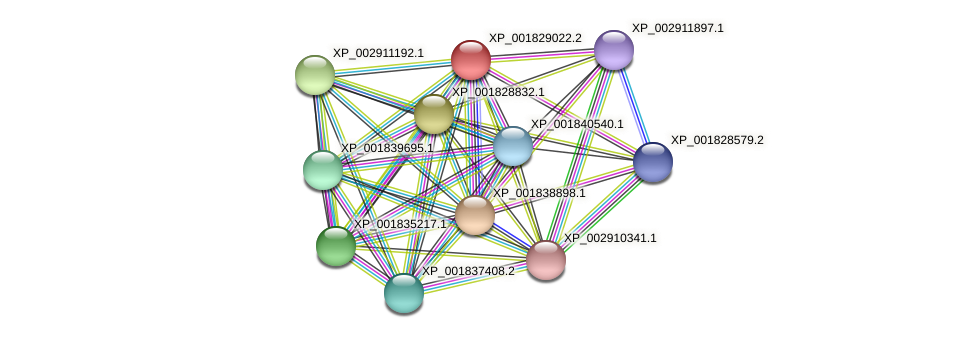 CC1G_01702 protein (Coprinopsis cinerea) - STRING interaction network