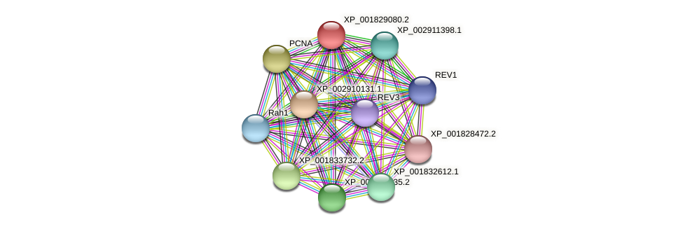 CC1G_01760 protein (Coprinopsis cinerea) - STRING interaction network