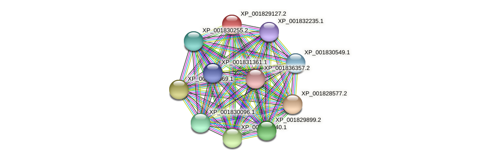 CC1G_01807 protein (Coprinopsis cinerea) - STRING interaction network