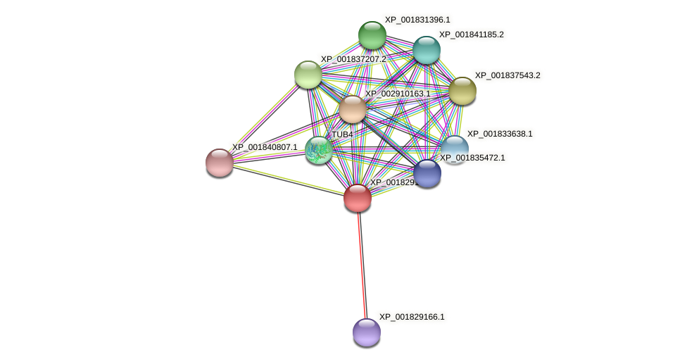 CC1G_01867 protein (Coprinopsis cinerea) - STRING interaction network