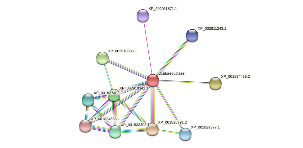 CC1G_01876 protein (Coprinopsis cinerea) - STRING interaction network