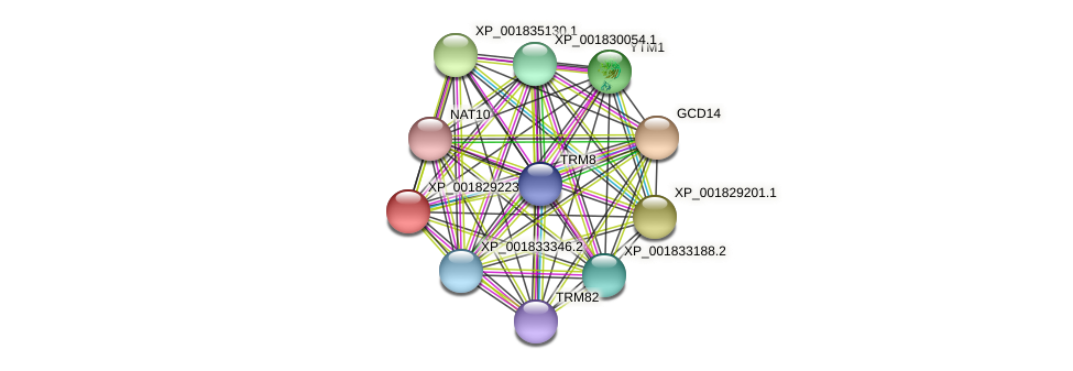 CC1G_06560 protein (Coprinopsis cinerea) - STRING interaction network