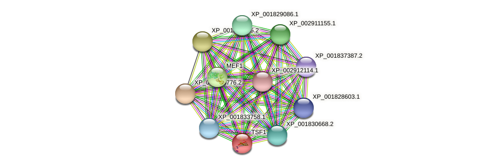 TSF1 protein (Coprinopsis cinerea) - STRING interaction network