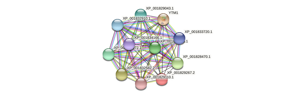 CC1G_06604 protein (Coprinopsis cinerea) - STRING interaction network