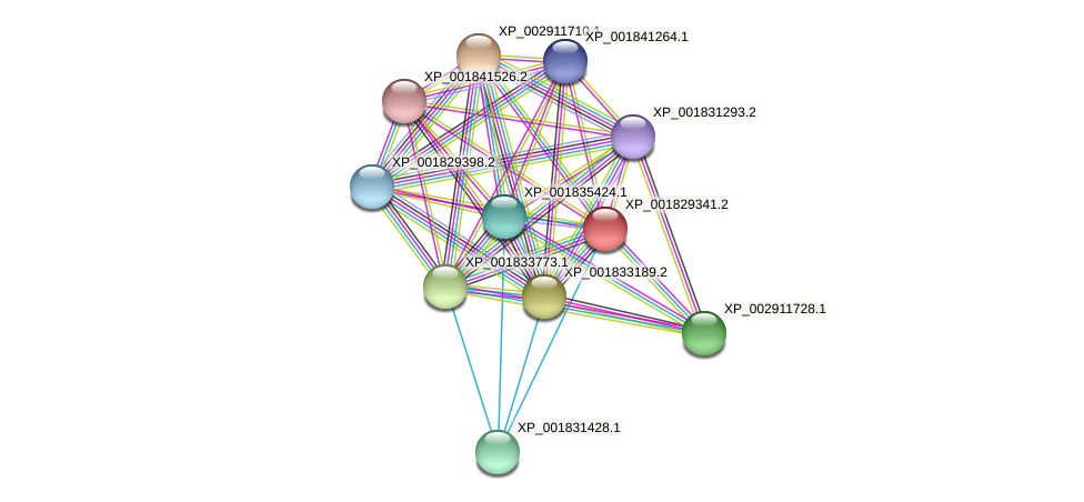 CC1G_00520 protein (Coprinopsis cinerea) - STRING interaction network
