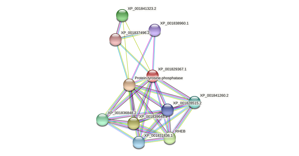 CC1G_00546 protein (Coprinopsis cinerea) - STRING interaction network