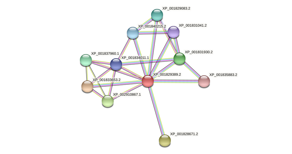 CC1G_00568 protein (Coprinopsis cinerea) - STRING interaction network