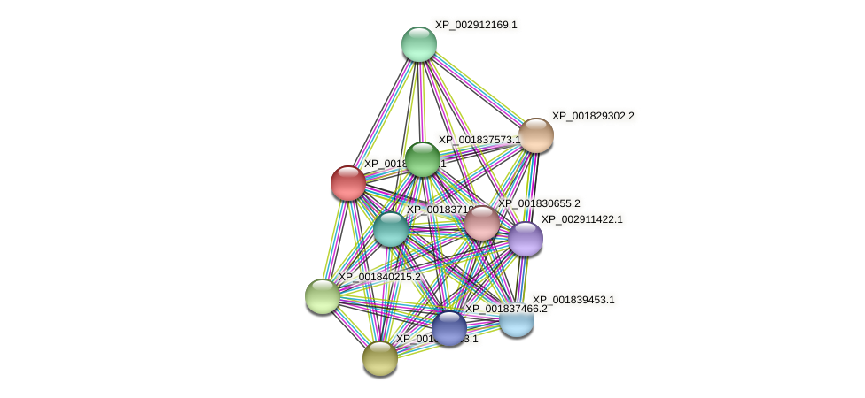 CC1G_00573 protein (Coprinopsis cinerea) - STRING interaction network