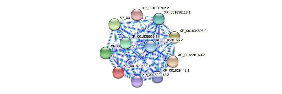 CC1G_00642 protein (Coprinopsis cinerea) - STRING interaction network