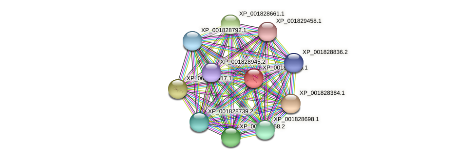 CC1G_10110 protein (Coprinopsis cinerea) - STRING interaction network