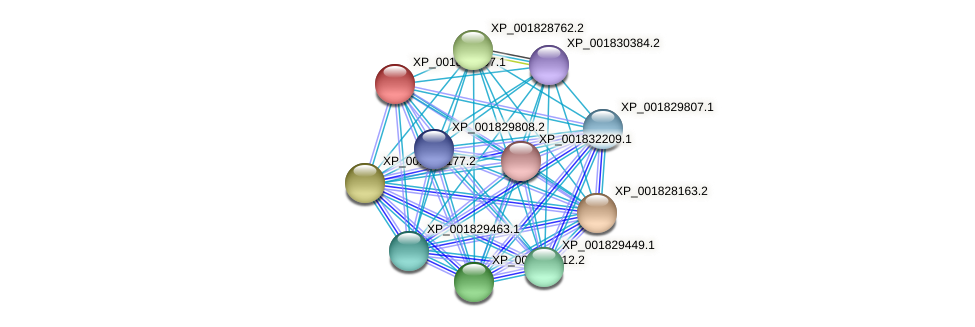 CC1G_09596 protein (Coprinopsis cinerea) - STRING interaction network