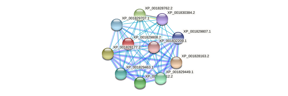 CC1G_06017 protein (Coprinopsis cinerea) - STRING interaction network
