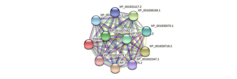 CC1G_04501 protein (Coprinopsis cinerea) - STRING interaction network