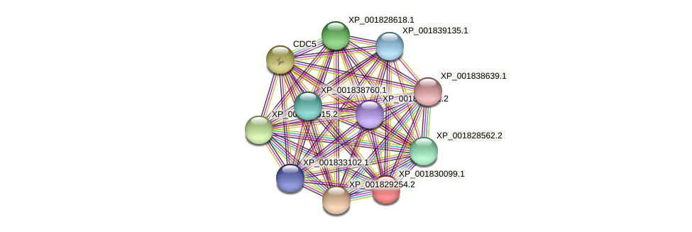 CC1G_04532 protein (Coprinopsis cinerea) - STRING interaction network
