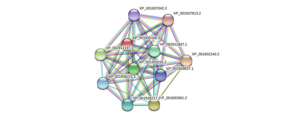 CC1G_09326 protein (Coprinopsis cinerea) - STRING interaction network