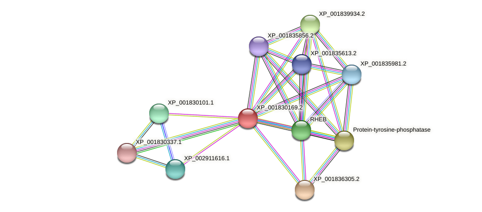 CC1G_09329 protein (Coprinopsis cinerea) - STRING interaction network