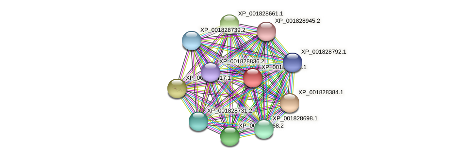 CC1G_09348 protein (Coprinopsis cinerea) - STRING interaction network