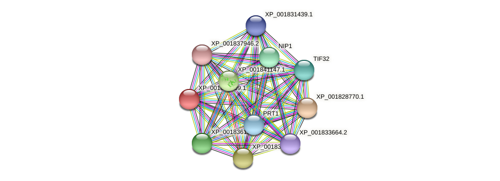 CC1G_12096 protein (Coprinopsis cinerea) - STRING interaction network
