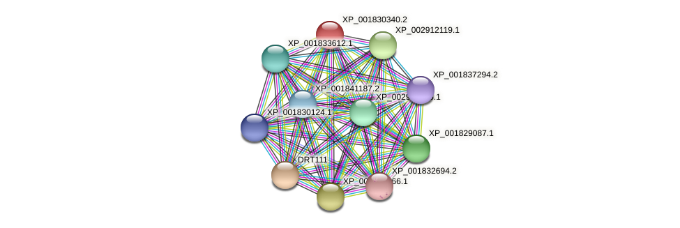 CC1G_01976 protein (Coprinopsis cinerea) - STRING interaction network