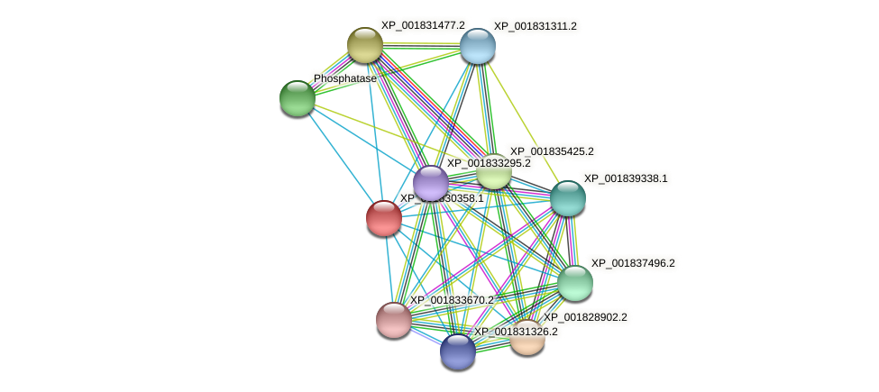 CC1G_01994 protein (Coprinopsis cinerea) - STRING interaction network