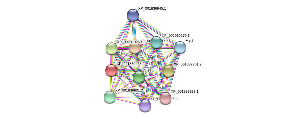CC1G_07383 protein (Coprinopsis cinerea) - STRING interaction network
