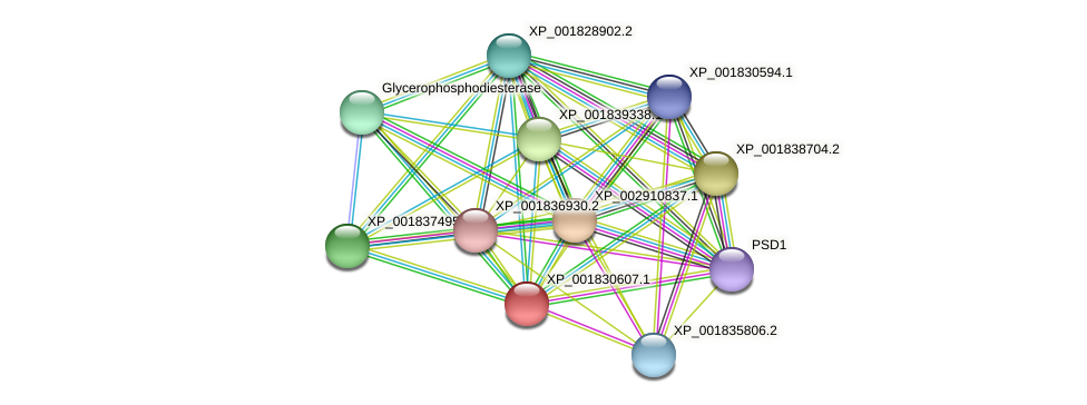 CC1G_06873 protein (Coprinopsis cinerea) - STRING interaction network