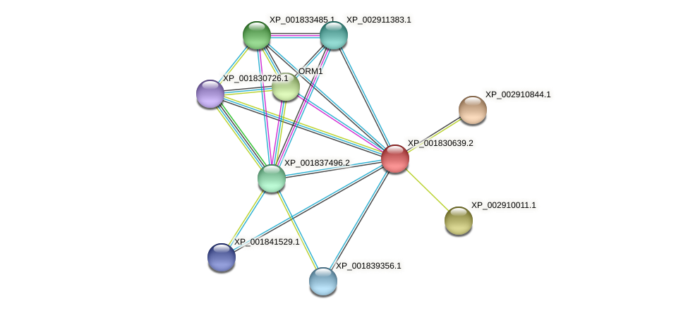 CC1G_06905 protein (Coprinopsis cinerea) - STRING interaction network