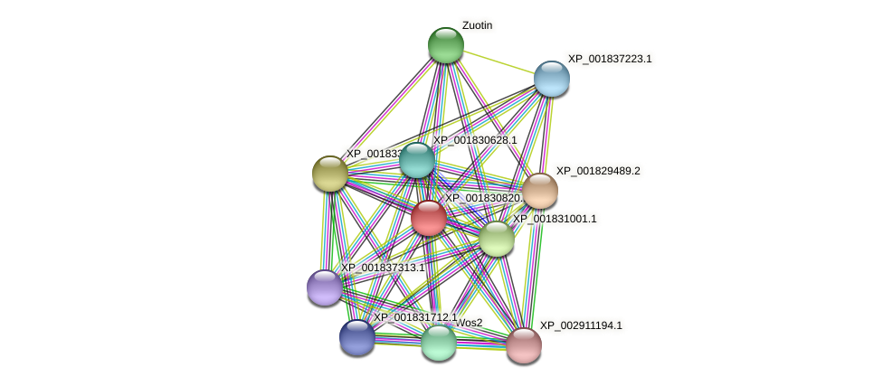 CC1G_02271 protein (Coprinopsis cinerea) - STRING interaction network