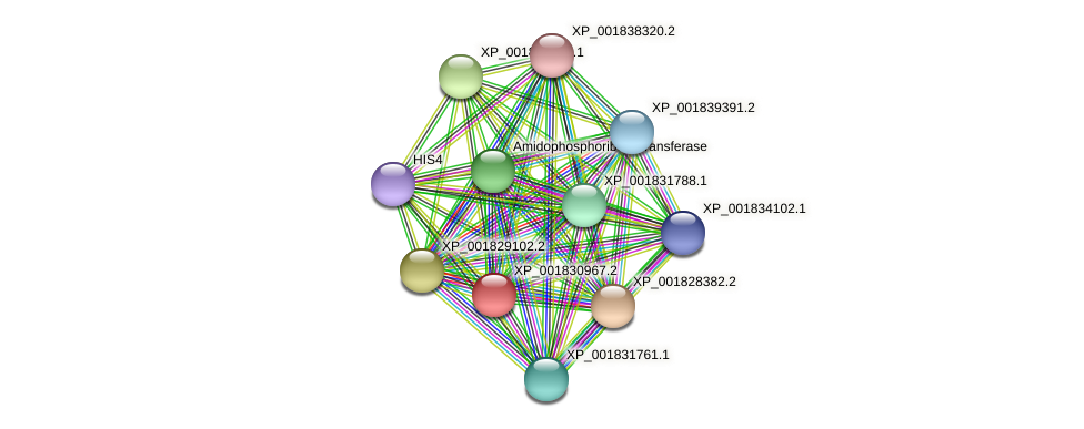 CC1G_11804 protein (Coprinopsis cinerea) - STRING interaction network