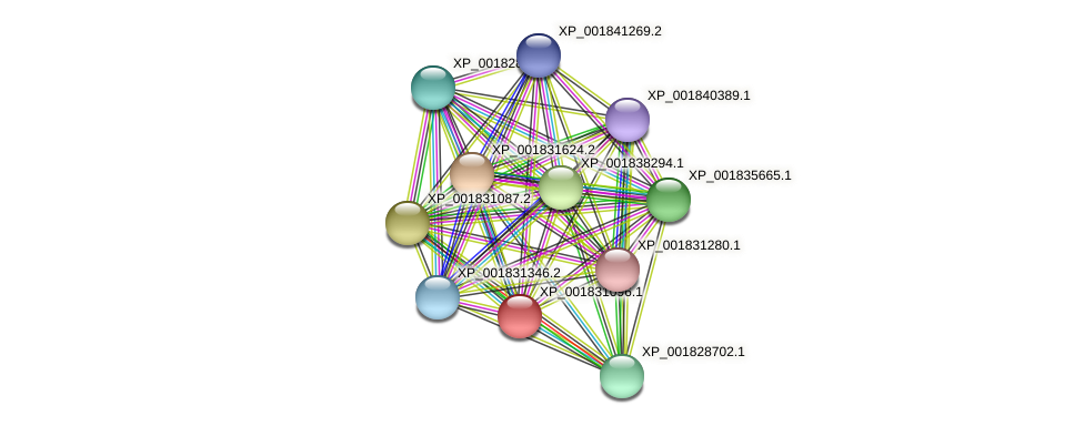 CC1G_03987 protein (Coprinopsis cinerea) - STRING interaction network