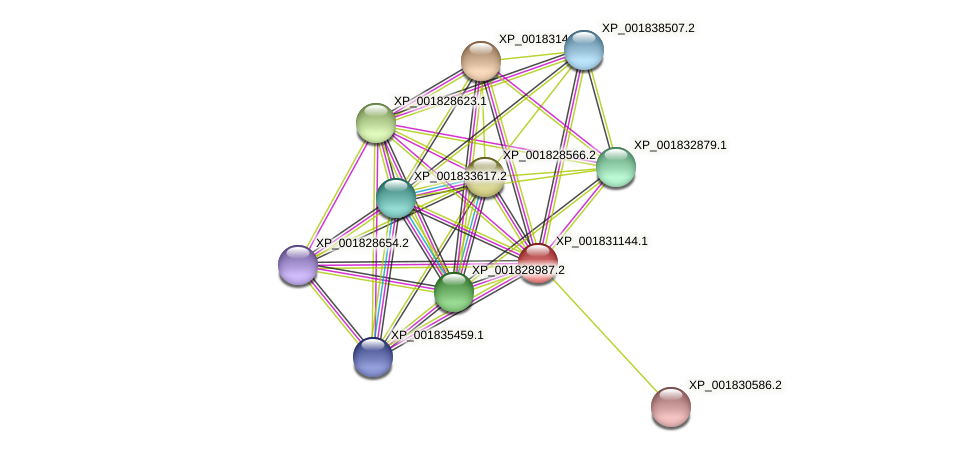 CC1G_04035 protein (Coprinopsis cinerea) - STRING interaction network