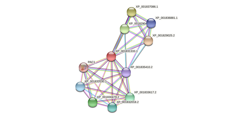 CC1G_00880 protein (Coprinopsis cinerea) - STRING interaction network