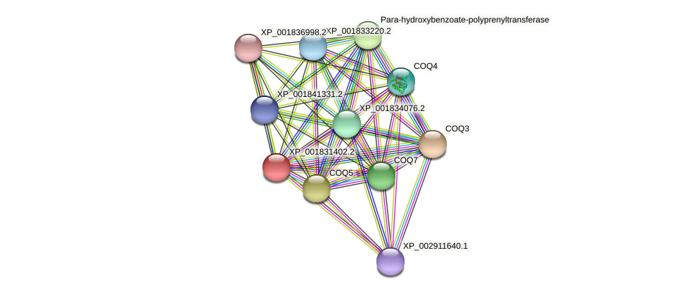 CC1G_00949 protein (Coprinopsis cinerea) - STRING interaction network