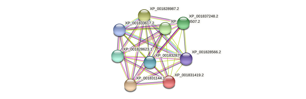 CC1G_00966 protein (Coprinopsis cinerea) - STRING interaction network