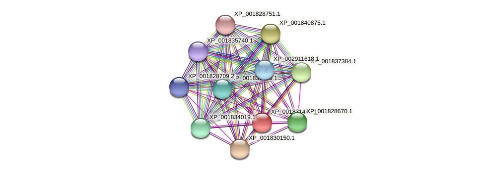 CC1G_00995 protein (Coprinopsis cinerea) - STRING interaction network