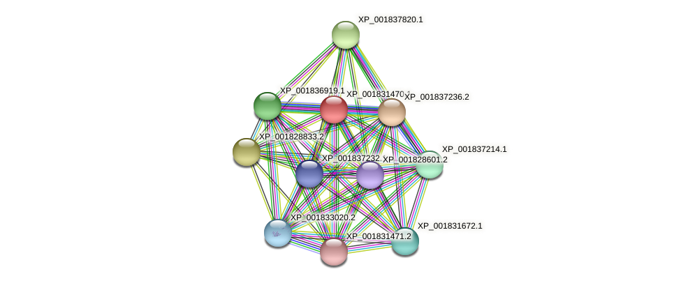 CC1G_08999 protein (Coprinopsis cinerea) - STRING interaction network