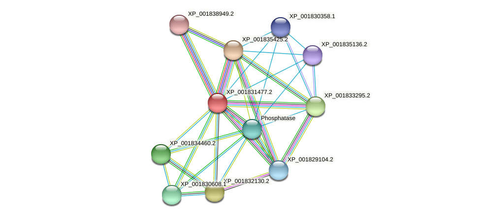 CC1G_09006 protein (Coprinopsis cinerea) - STRING interaction network