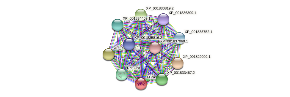 CC1G_09015 protein (Coprinopsis cinerea) - STRING interaction network