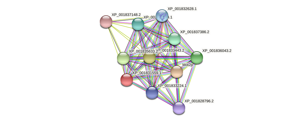 CC1G_11556 protein (Coprinopsis cinerea) - STRING interaction network