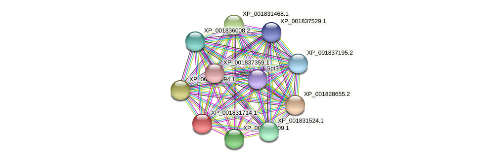 CC1G_08318 protein (Coprinopsis cinerea) - STRING interaction network