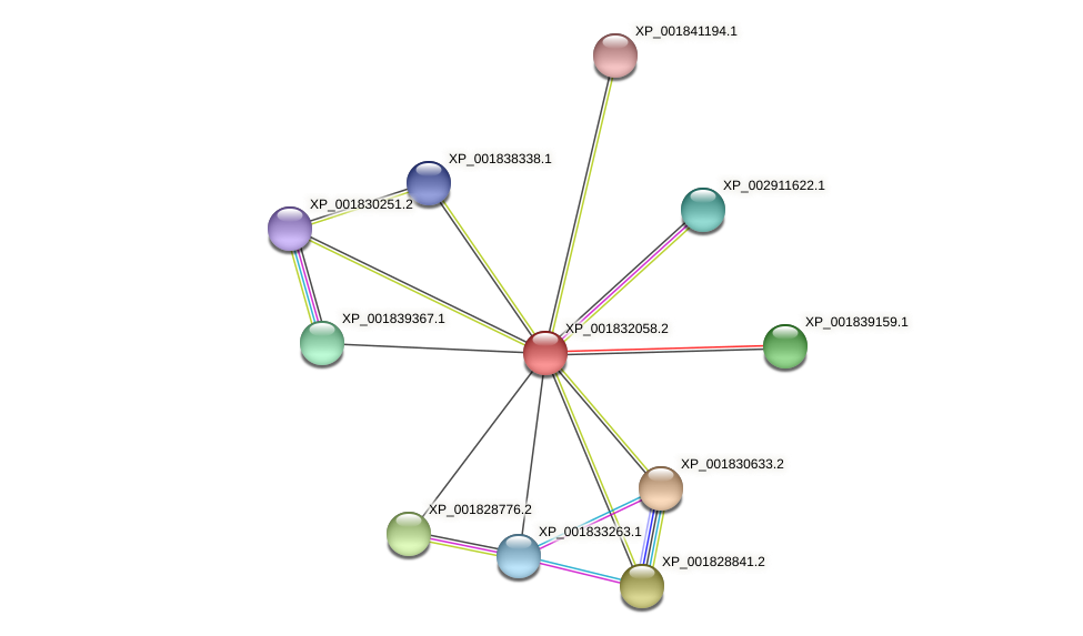 CC1G_07429 protein (Coprinopsis cinerea) - STRING interaction network
