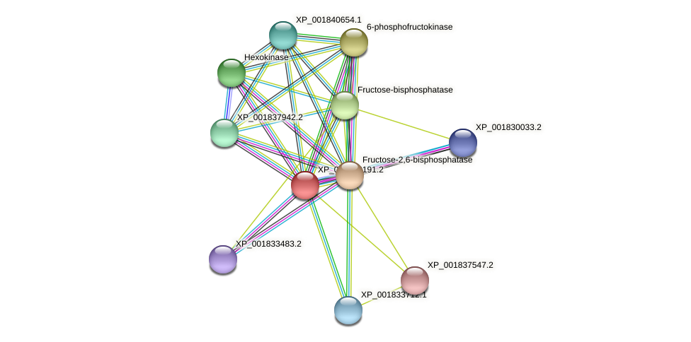 CC1G_02453 protein (Coprinopsis cinerea) - STRING interaction network