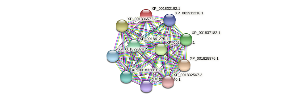 CC1G_02454 protein (Coprinopsis cinerea) - STRING interaction network