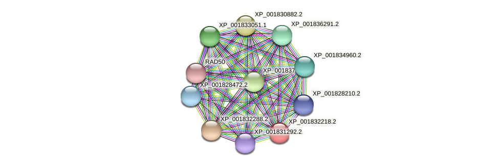 CC1G_02480 protein (Coprinopsis cinerea) - STRING interaction network
