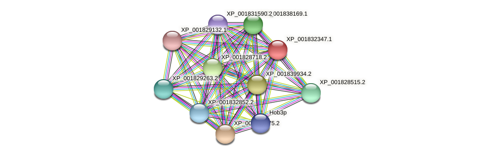 CC1G_07734 protein (Coprinopsis cinerea) - STRING interaction network