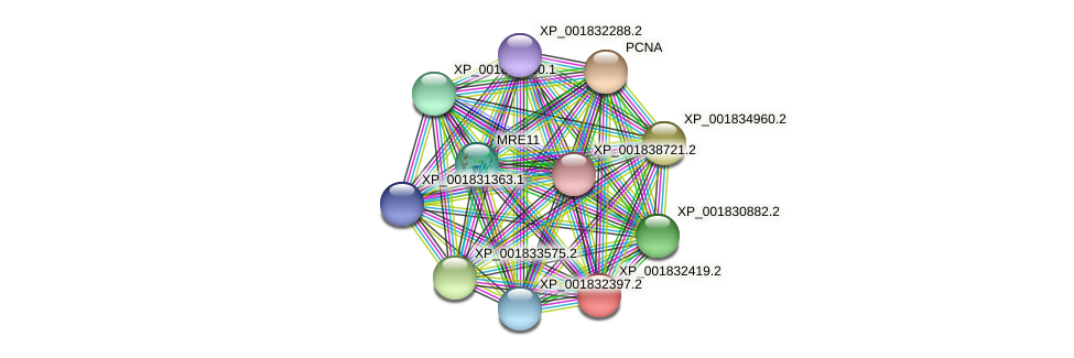 CC1G_07679 protein (Coprinopsis cinerea) - STRING interaction network