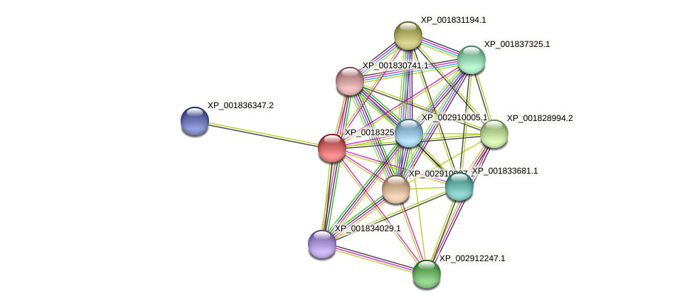CC1G_03574 protein (Coprinopsis cinerea) - STRING interaction network
