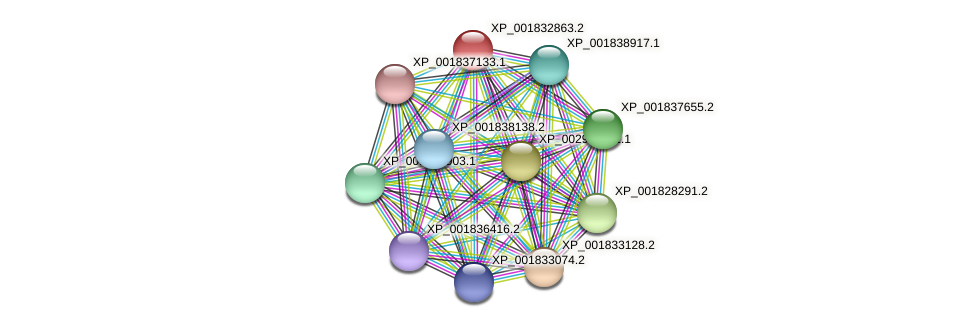 CC1G_10082 protein (Coprinopsis cinerea) - STRING interaction network